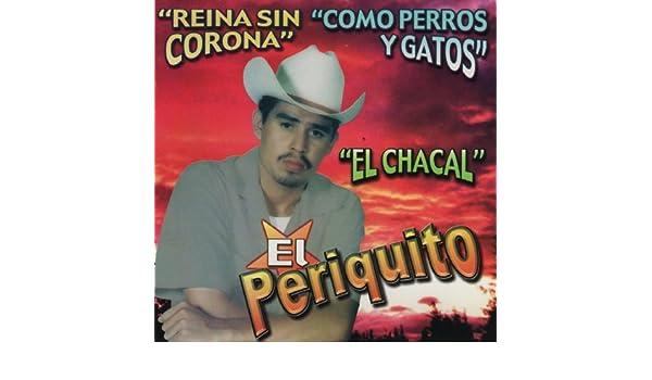Como Perros y Gatos by EL Periquito De Sinaloa on Amazon Music - Amazon.com
