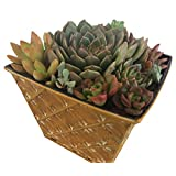 Succulent Oasis Live Plant Arrangement in Textured Square Tin Planter