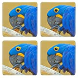 Luxlady Square Coasters Non-Slip Natural Rubber Desk Coasters ID: 40342947 Blue parrot at background Bali Bird Park Indonesia There is copy space for tex