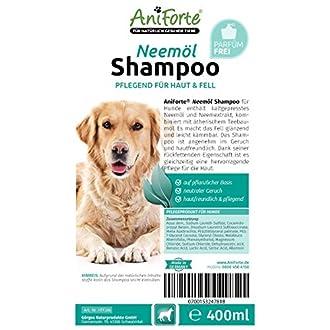 Hundeshampoo Bild
