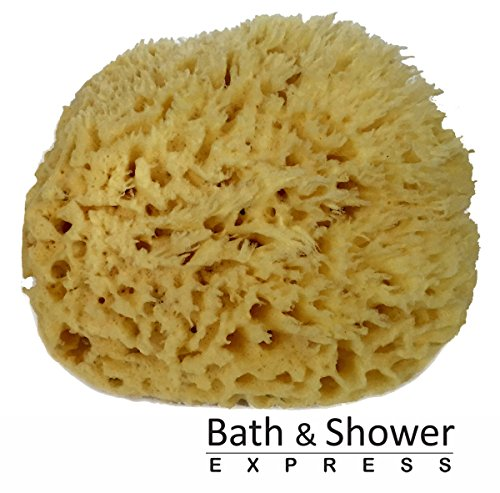 "Sea Wool Sponge 5-6"" (Large) by Bath & Shower Express ® Natural Renewable Resource!"