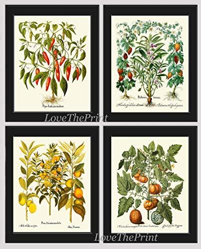 Fruit Vegetable Herb Print Set of 4 Antique Botanical Prints Red