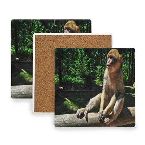A Monkey Sitting Handrail Park Coasters, Protection for Granite, Glass, Soapstone, Sandstone, Marble, Stone Table - Perfect Drink Coasters,Square Cup Mat Pad for Home, Kitchen or Bar 1 Piece -