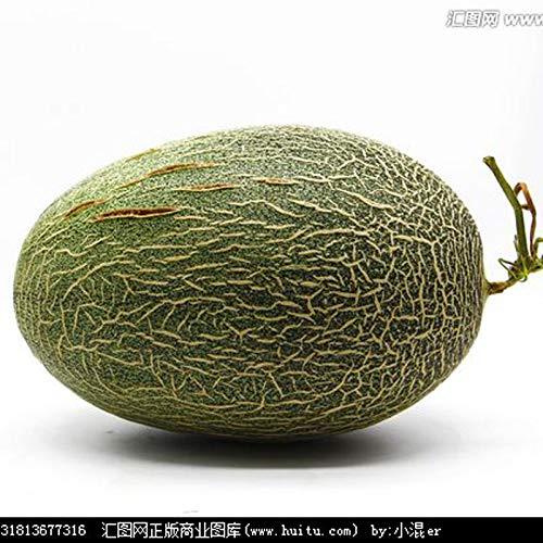 HONIC 30 Piezas de frutales Japón Bonsai Melón Verde Original ...