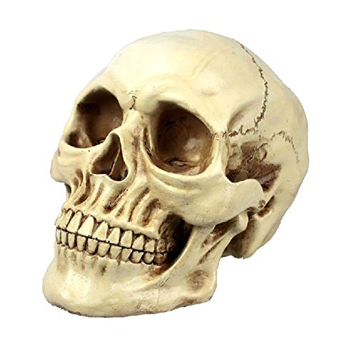 Scary Halloween Decorations Realistic Life Size Human Skull Human Adult Skull Anatomical Model