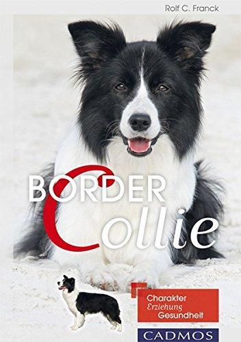 Border Collie: Charakter, Erziehung, Gesundheit
