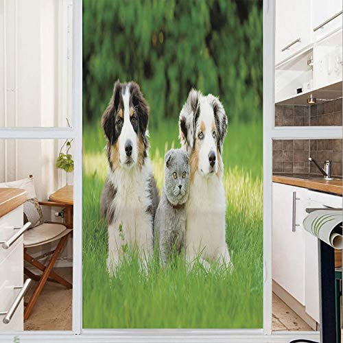 - Decorative Window Film,No Glue Frosted Privacy Film,Stained Glass Door Film,Cute Pets Puppy Family in the Garden Australian Shepherds and A Cat Scenery Decorative,for Home & Office,23.6In. by 78.7In C