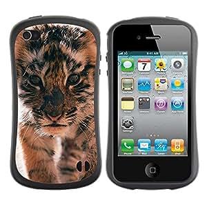 Paccase / Suave TPU GEL Caso Carcasa de Protección Funda para - tiger cub roar cute puppy animal furry - Apple Iphone 4 / 4S