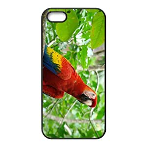 Cute Acutilingual Parrot Hight Quality Plastic Case for Iphone 5s by icecream design