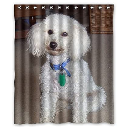 Amazon Poodle Lovely Little Puppy Dog White Shower Curtain 60 X