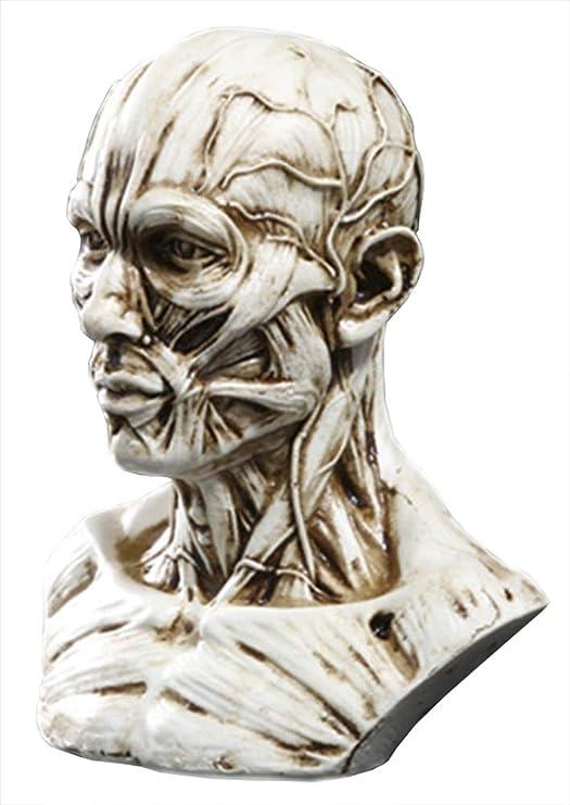 "4/"" Human Model Anatomy Skull Head Muscle Bone Medical Artist Drawing Antique"