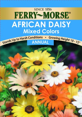 Ferry-Morse African Daisy Mixed Colors Seeds (Annual)