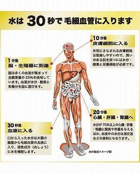 【健康食品】【水】高濃度 酸素リキッドWOX(ウォックス) ◆ 300mL×24本 B00H7Y19Y8