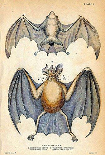 Vintage Halloween Vampire Bat Quilting Fabric Block 8x10 -