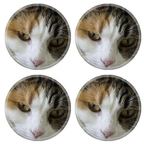 Basking Cat (MSD Round Coasters Non-Slip Natural Rubber Desk Coasters design 20840745 young cat resting basking in the sun)