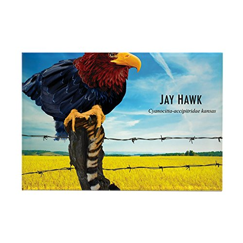 CafePress - KU-Jay-Hawk - Rectangle Magnet, 2