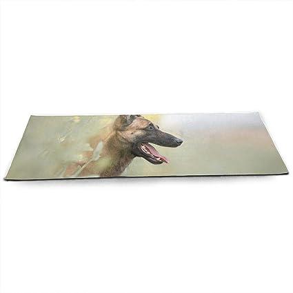 Amazon.com: Funny Cute Pet German Shepherd Dog Adorable ...