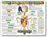 Kemah The Bird's Body Systems - A Double-Sided, UV Protected, Laminated Bird Anatomy Chart: A Learning and Teaching Chart for Veterinary Science Professionals, Veterninary Technicians, Bird Lovers