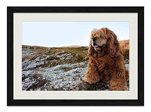 (R.Maltto Cocker Spaniel - Art Print Wall Hang Black Wood Frame Poster Framed Picture Home Decor(20x14inch))
