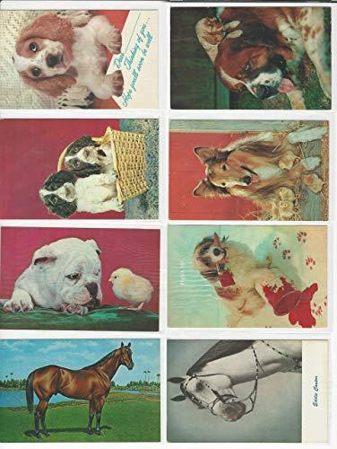 Postcard Lot of 8 Animals B, Dog, St. Bernard, Horse, Puppies, Chicks, JFZ