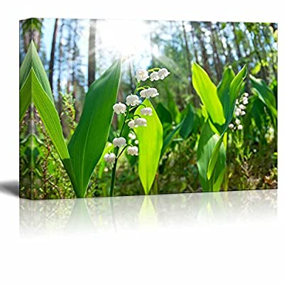 Canvas Prints Wall Art - Blossoming Lilies of The Valley in The Forest in a Sunny Day | Modern Wall Decor/Home Decoration Stretched Gallery Canvas Wrap Giclee Print & Ready to Hang - 16