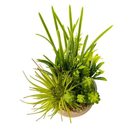 BEGONDIS Artificial Succulents Plants Plastic Fake Topiary Selected Combination With Gray Pot For Home Décor by BEGONDIS (Image #9)