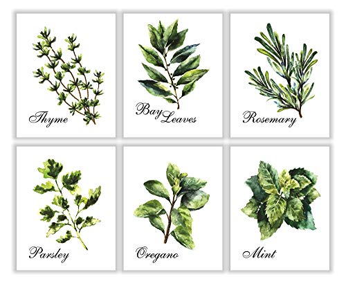 PARTH IMPEX Kitchen Herbs Art Prints - Botanical Prints - (Set of 6) - Unframed - 8