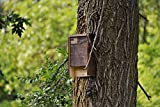 Premium Bat House | Made in USA | Pre-finished Select Pine | Ready to install | Ideal Bat Shelter for cold and cool climates | Environmentally Responsible Eco-Friendly Mosquito Control | Dark Pine