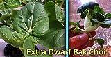 Extra Dwarf Bok Choy Or Pak Choi (2000 Seeds) - Heirloom Vegetable, Organic