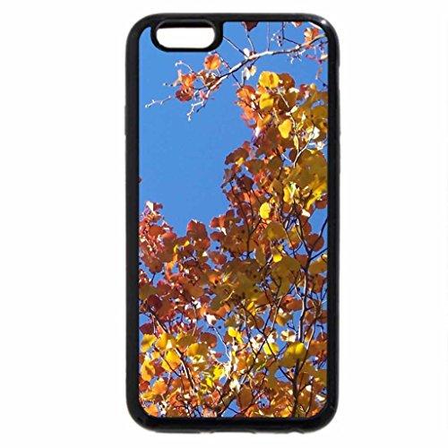 iPhone 6S / iPhone 6 Case (Black) Autumn Aspens