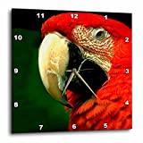 3dRose Green Winged Macaw Wall Clock, 10 by 10-Inch Review