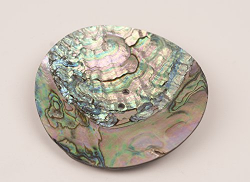 - Abalone Shell Discs - 3 Inch 2 Hole, 2 pieces