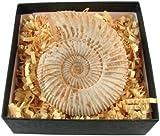 Junior Geo - Genuine Fossil Ammonite in a Box