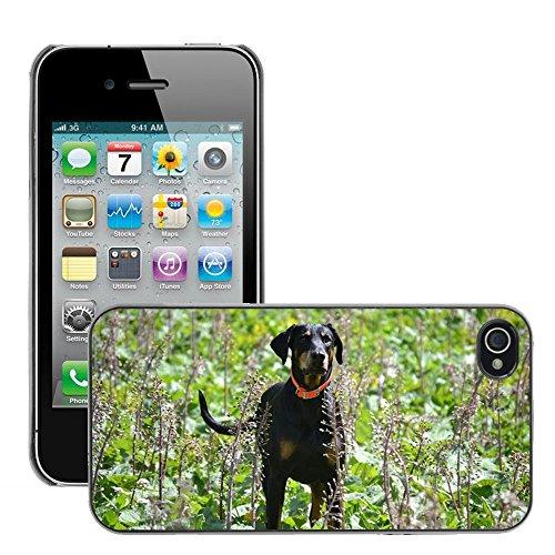 Bild Hart Handy Schwarz Schutz Case Cover Schale Etui // M00134390 Dobermann Hund Tier Natur // Apple iPhone 4 4S 4G