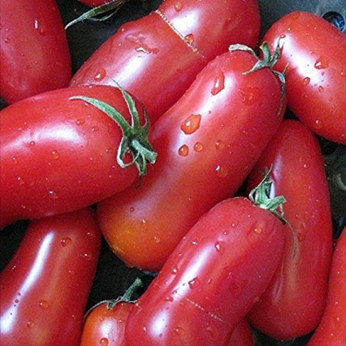 Tomato San Marzano 50 Fresh Heirloom Seeds Super Yummy (Grafting Tomato Seeds compare prices)