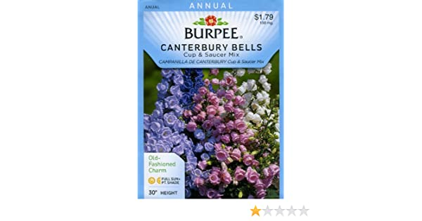 Canterbury Bells Cup /& Saucer Mixed Kings Seeds 850 Seeds