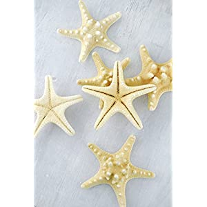 Wayhome Fair Armored Starfish 4-5in (Pack of 7) - Excellent Home Decor - Indoor & Outdoor 25