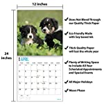 2020 Australian Shepherds Wall Calendar by Bright Day, 16 Month 12 x 12 Inch, Cute Dogs Puppy Animals Aussies Canine 11