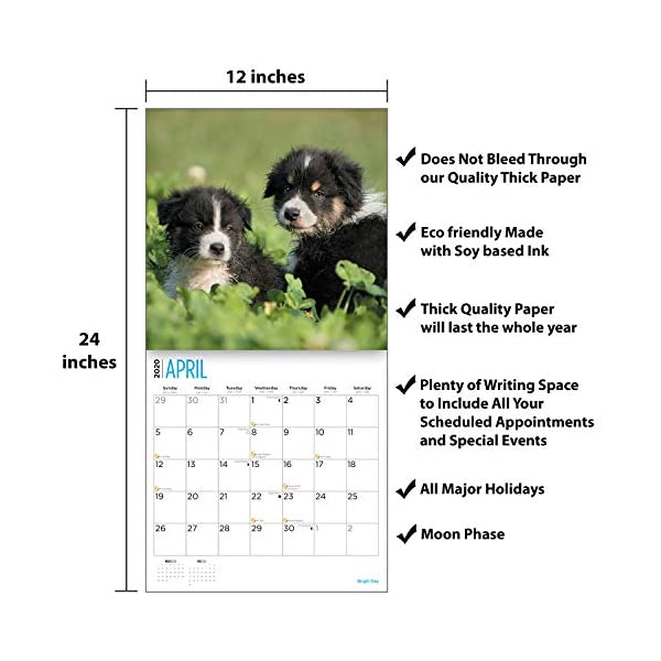 2020 Australian Shepherds Wall Calendar by Bright Day, 16 Month 12 x 12 Inch, Cute Dogs Puppy Animals Aussies Canine 4