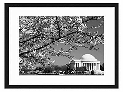 cherry blossoms jefferson memorial washington dc - Art Print Wall Solid Wood Framed Picture (Black & White 20x14 inches)