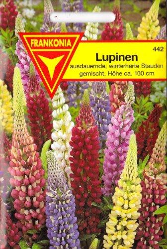 Lupinen, Lupinus polyphyllus, ca. 40 Samen, winterhart