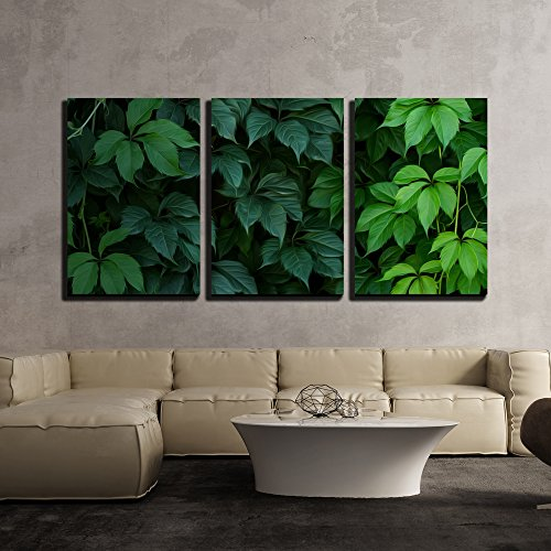 Four Panel Natural Framed Screen (wall26 - 3 Piece Canvas Wall Art - Wall of Green Climbing Plant Full Screen as Background. Oil Painting Effect. - Modern Home Decor Stretched and Framed Ready to Hang - 16