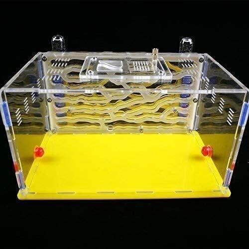 Ameisenneststadt Ameisenkäfigfarm Transparent Ameisenwerkstatt Hoch dick Einfach zu installieren Bambusglas Ameisenhaus Geburtstagsgeschenk (Color : Blue)