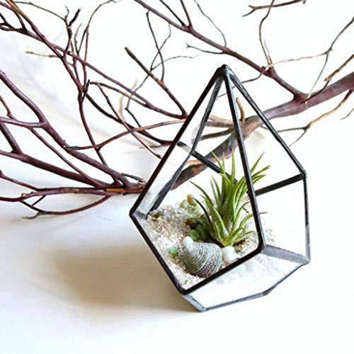 2pcs Clear Glass Geometric Taerrarium Box Tabletop Succulent Fern Planter