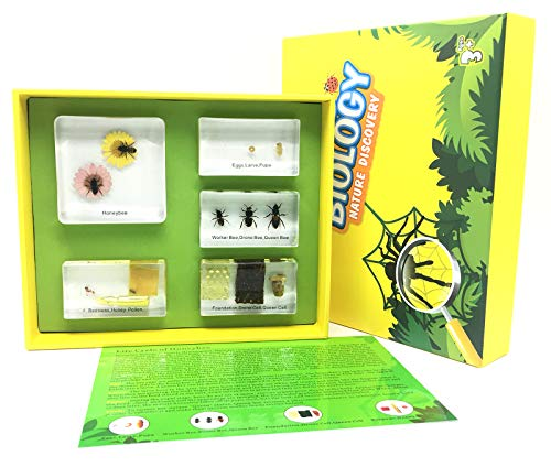 Lifecycle of a Honey Bee in Acrylic Block Science Classroom Specimens for Science Education