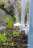 Best Co2 Diffuser For Aquaria - Pollen Glass CO2 Diffuser for Aquarium Planted Tank Review