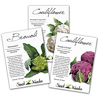 Assortment of 3 Cauliflower Packages (Romanesco, Purple of Sicily & Snowball Y Improved) Non-GMO Seeds by Seed Needs