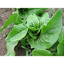 Organic Barese Chard Seed - Medical Edible.
