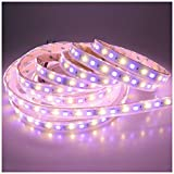 LEDENET RGB+W+WW Flexible LED Strip Lighting Full Color Changing Color Temperature Adjustable Cold White Warm White CCT RGB LED Tape Ribbon Lamp 5m 16.4ft Outdoor Use Waterproof IP67