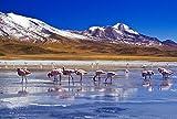 FHYGJD Snow Mountains Lake Birds Flamingos Art Print Canvas Poster,Home Wall Decor(20x30 inch)